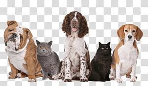Dog–cat relationship Pet sitting Dog–cat relationship Kitten, Dog PNG