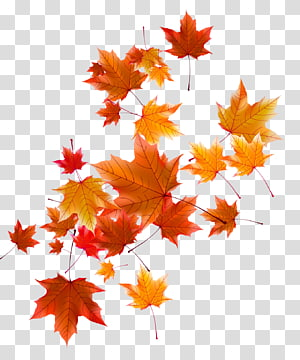 orange and red autumn leaf, Autumn Leaf, Autumn leaves PNG clipart