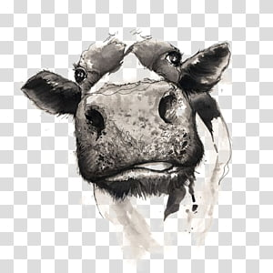 drawing cow PNG clipart