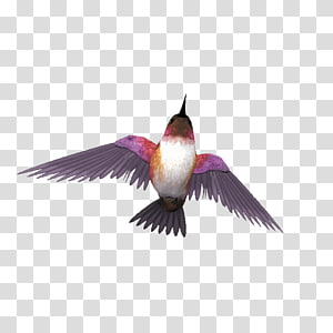 Bird Ink wash painting Cartoon, Purplish blue bird ornaments PNG clipart