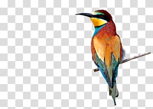 Bee-eater Hummingbird M PaintShop Pro Tutorial, others PNG
