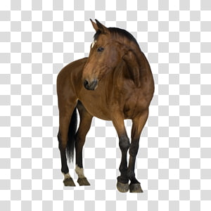Horse Foal Mare , horse PNG