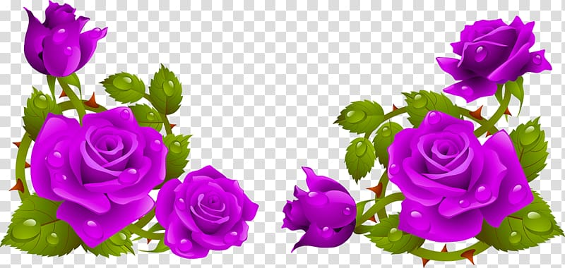 Garden roses Flower Computer Icons , rose PNG