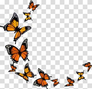 Monarch butterfly, butterfly PNG