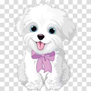 medium-coated white dog , Havanese dog Maltese dog Puppy Bichon Frise, puppy PNG clipart