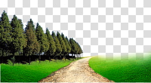 pathway surrounded by pine trees, Forest Woodland Computer file, forest PNG clipart