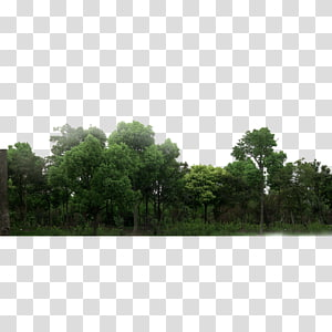 green leafed trees, Forest Green, forest PNG