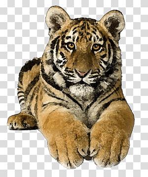 Bengal cat Bengal tiger Siberian Tiger Felidae , tiger PNG