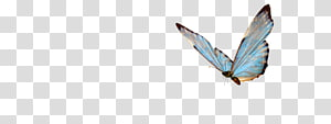 blue butterfly PNG clipart