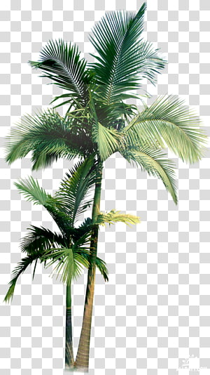 two green palm trees, Arecaceae Palmier, Easter Party Flyer PNG clipart