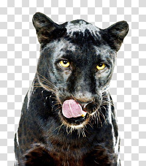 Leopard Jaguar Black panther Cat Dog, Drew Barrymore 90s PNG