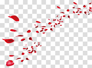 Petal , others PNG clipart