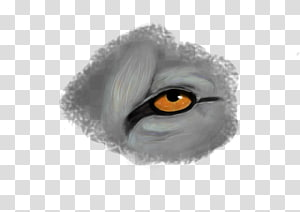 Eyebrow Fur Eyelash Close-up, Eye PNG clipart