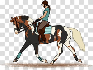 Stallion Hunt seat Dressage Rein Mare, horse PNG
