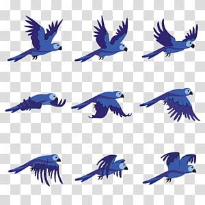 Bird Beak Parrot Animation , bird PNG clipart