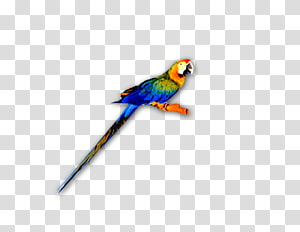 Macaw Lories and lorikeets Feather Parakeet Beak, parrot PNG clipart