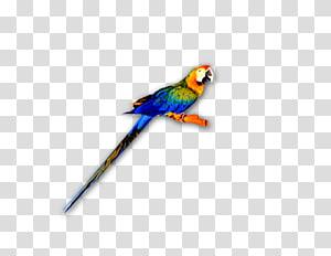 Macaw Lories and lorikeets Feather Parakeet Beak, parrot PNG
