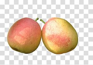 Pear Fruit Food Vegetable, Pear fruit PNG