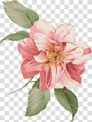 flowers,flowers PNG clipart