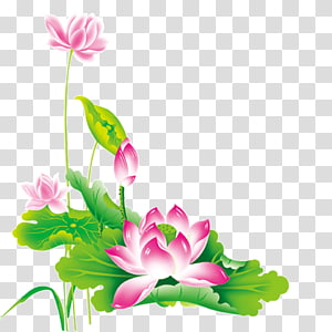 pink flowers painting, Nelumbo nucifera Chinese New Year Pink, Lotus Lotus PNG