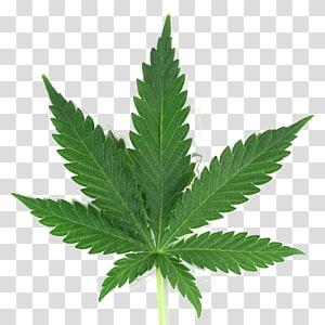 Medical cannabis Joint Leaf, cannabis PNG clipart