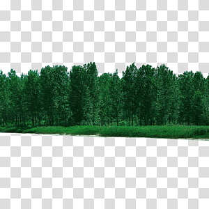 forest forested PNG