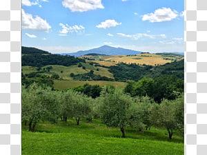 Montepulciano Biome Vegetation Grassland Mount Scenery, Arcieri Ugo Di Toscana PNG clipart