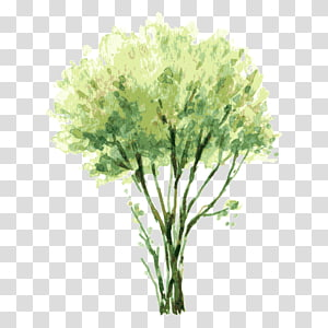 green leafed tree painting illustration, Watercolor painting Tree Shrub Illustration, tree,Trees PNG clipart