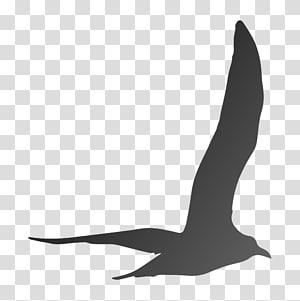 Beak Goose Cygnini Duck Anatidae, goose PNG