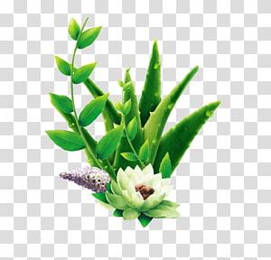 Aloe vera Advertising Cosmetics Skin care, Aloe PNG clipart