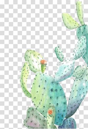 green cactus illustration, Cactaceae Watercolor painting Illustration, Watercolor cactus PNG clipart