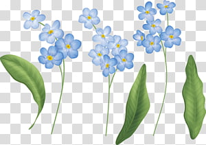 Flower Painting Portable Network Graphics Petal , wildflower PNG
