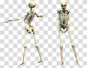 Skeleton PNG clipart