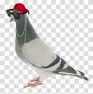 Homing pigeon Racing Homer Old German Owl pigeon Columbidae Bird, pigeon PNG