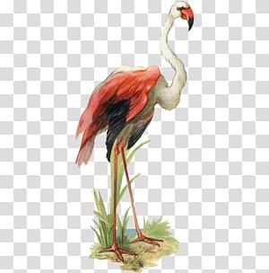 Bird Goose Flamingo , Creative hand-painted goose PNG