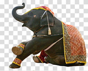 Asian elephant Hippopotamus Circus, elephant PNG