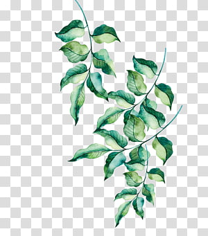 hand painted green leaves PNG