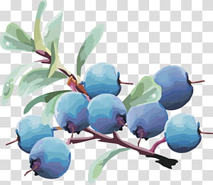 Bilberry Blueberry Fruit, lantern fruit blueberry fruit,blueberry PNG clipart