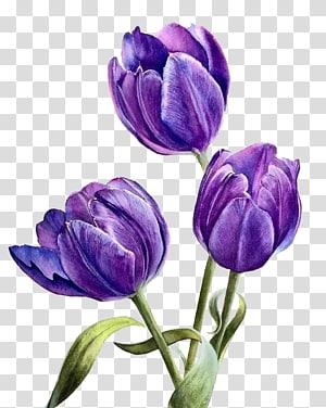 three purple tulips flowers, Flower Purple, Watercolor flowers PNG