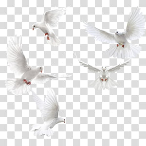 Columbidae Bird Squab, Creative dove wings,White dove, five doves PNG