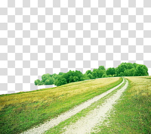Green grass road PNG