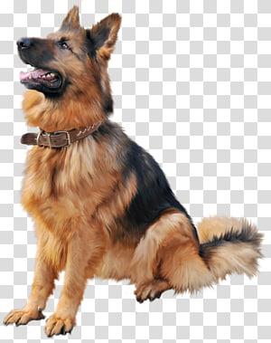 Dog collar Cat Shock collar Dog training, dog cartoon PNG