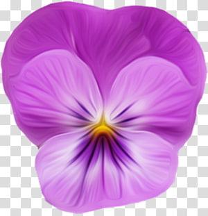 Violet , violet PNG