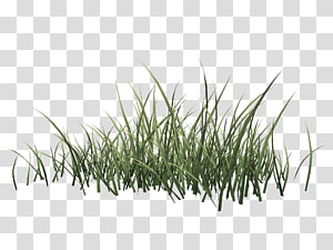 Drawing Herbaceous plant, spring grass PNG
