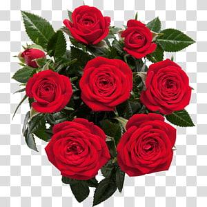 Garden roses, rose PNG