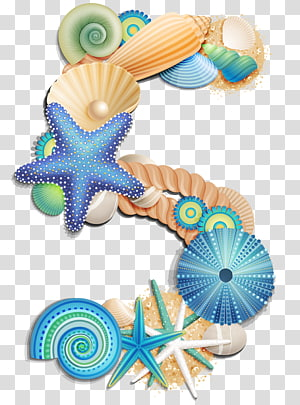assorted-color sea shell, Number , Number Five Sea Style PNG clipart