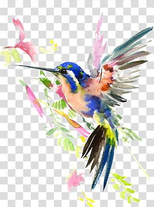 Hummingbird Watercolor painting Drawing, Hummingbird, painting of blue and pink bird PNG