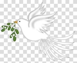 Rock dove Columbidae Bird Doves as symbols, Pretty Pigeon PNG