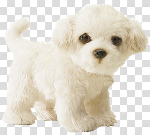 Maltese dog Puppy Stuffed Animals & Cuddly Toys Infant, poodle PNG