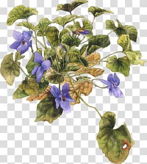 Violet Flower , violet PNG clipart